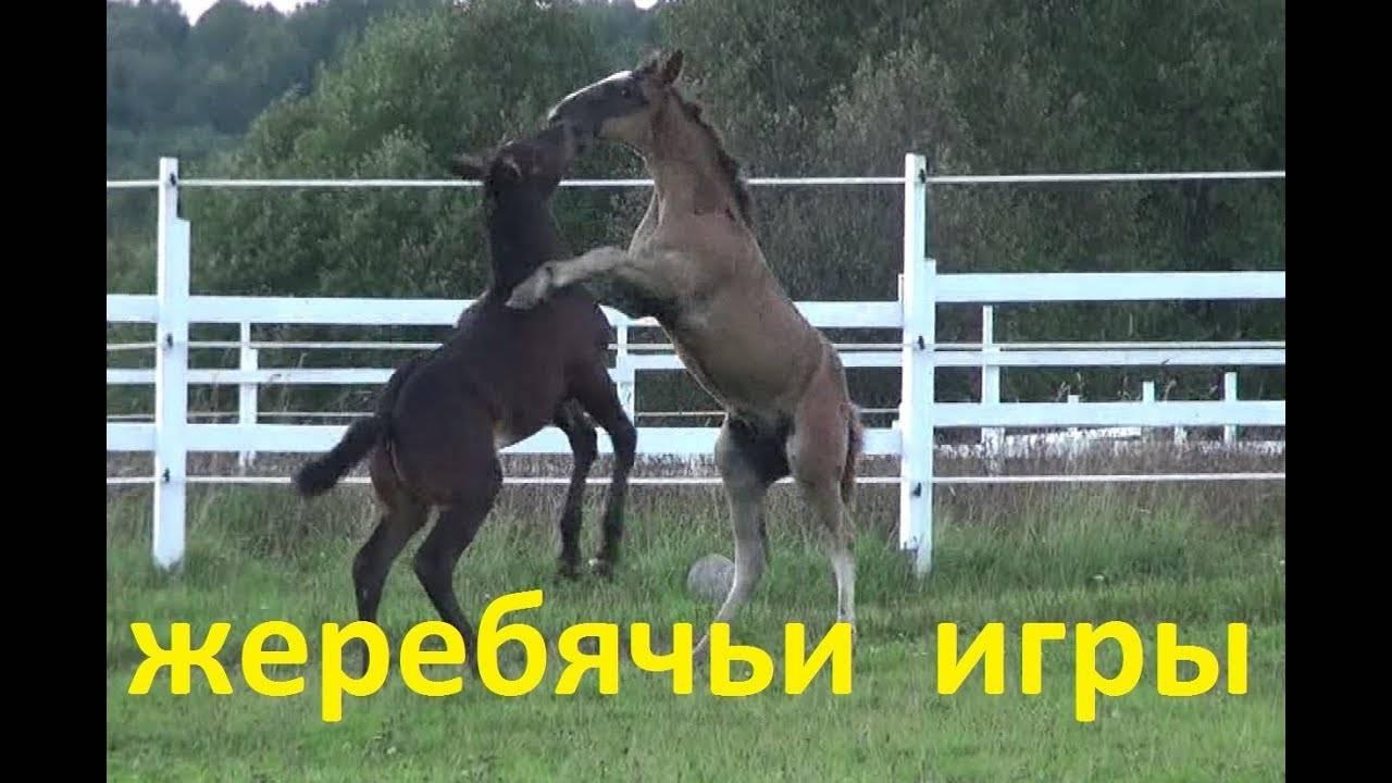 Как добиться доверия от пугливой лошади - wikihow