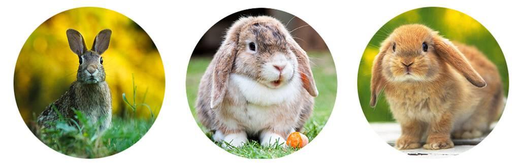 Можно ли кормить кроликов сырой травой