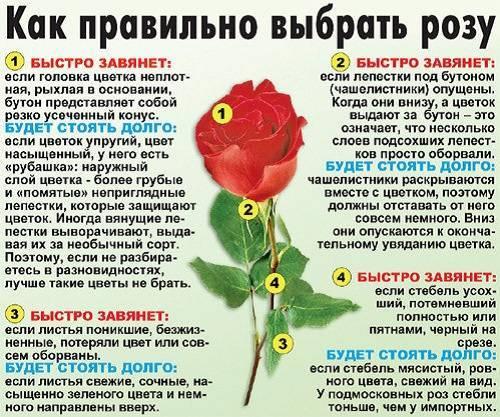 Как сохранить срезанные цветы дольше: советы и рекомендации :: инфониак