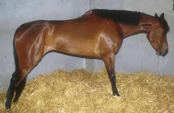 Характерные болезни лошадей