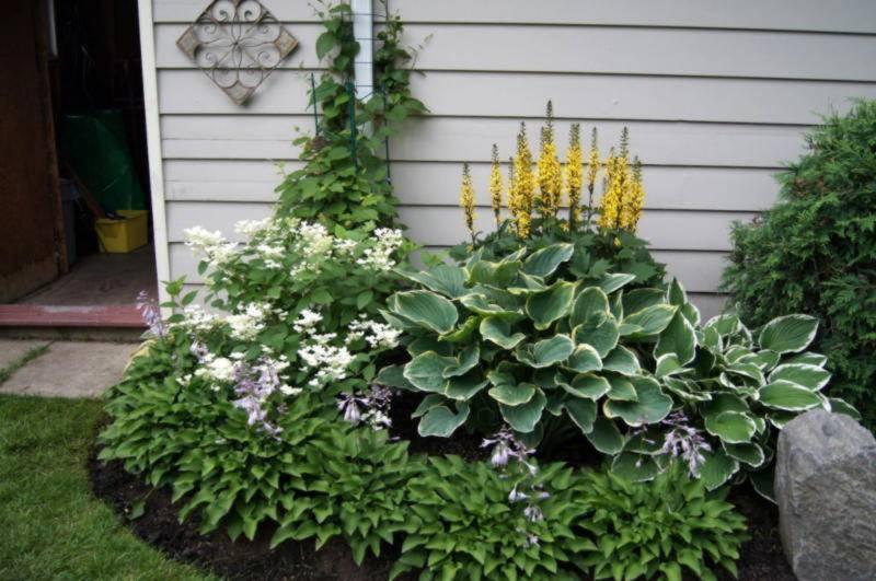 Украшаем сад «королевой тени» – руководство по оформлению сада хостами