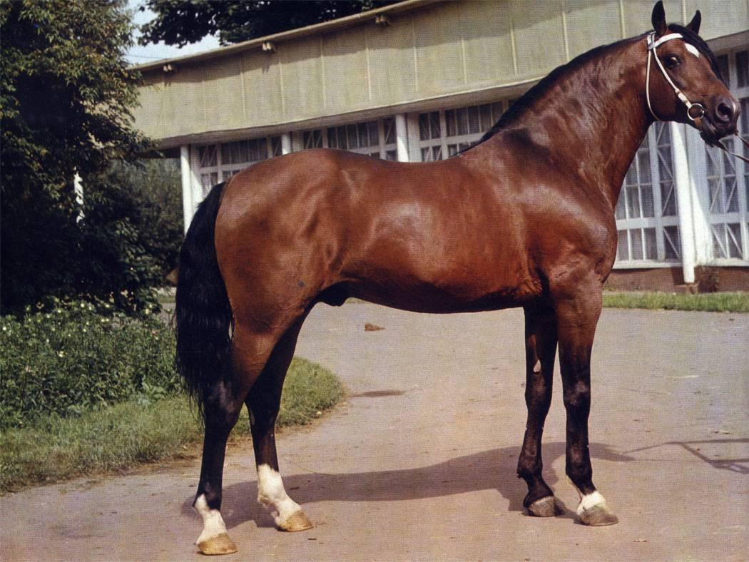 Лошади алтайского края