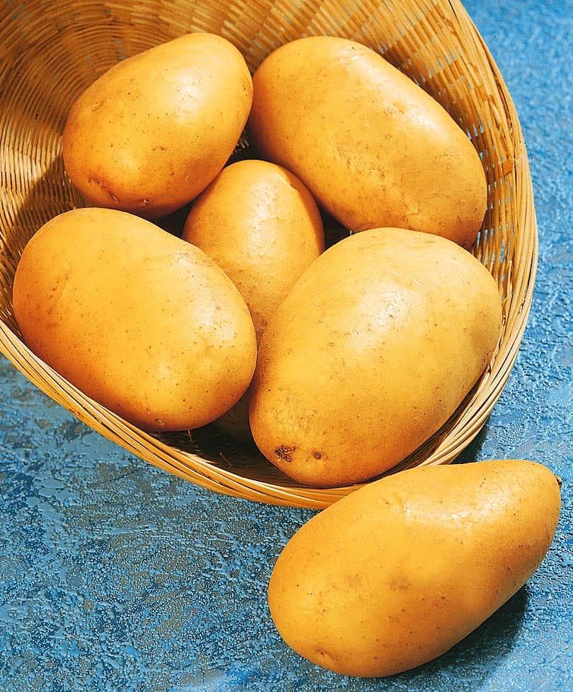 Сорт картофеля каменский: описание и характеристика, отзывы