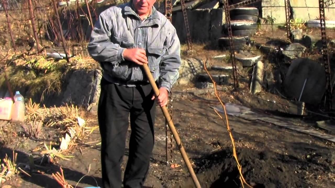 Способы размножения винограда - способы подготовки черенков винограда перед посадкой