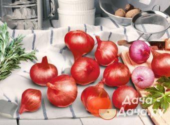 Лучшие сорта красного лука для огорода. чем отличается красный лук от обычного?