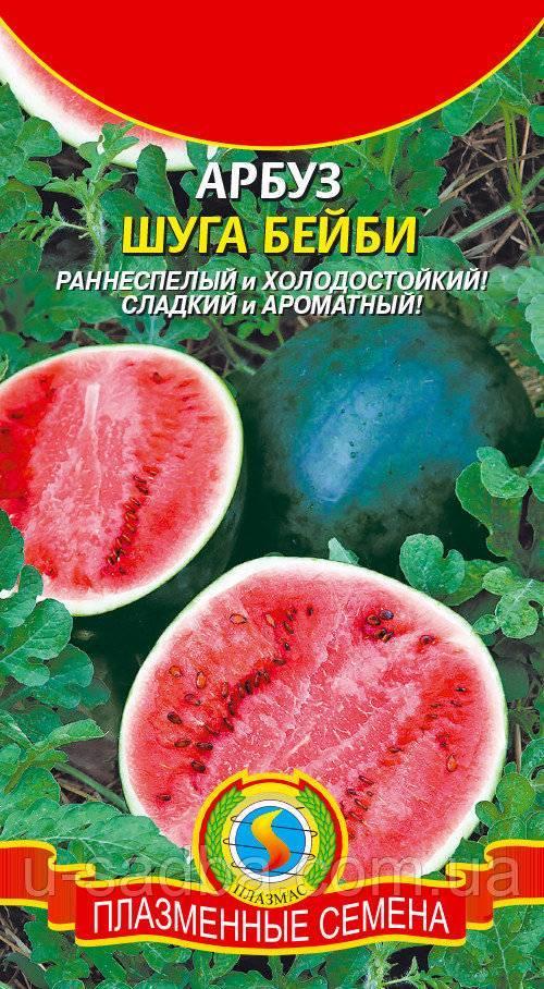 Все о сорте арбуза шуга бейби: описание, выращивание в подмосковье и сибири