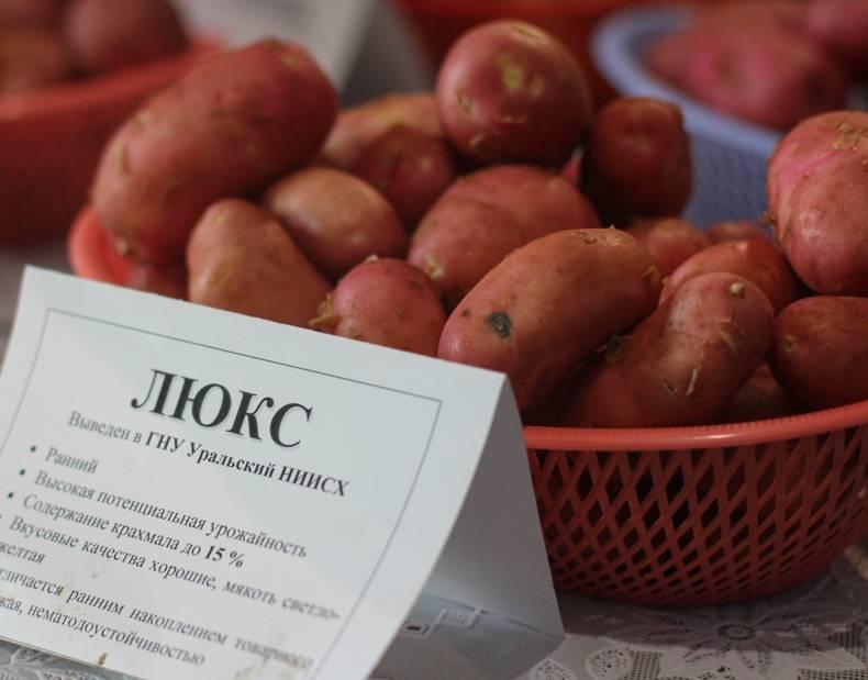 Картофель мондео