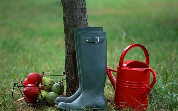 Как поливать плодовые деревья в жару