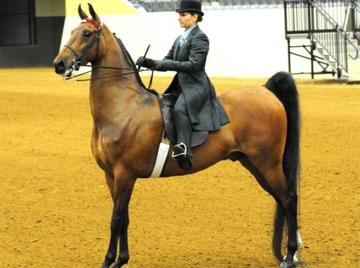 Американская лошадь: верховая, миниатюрная, рысак, кремовая и другие породы. происхождение и характеристика
