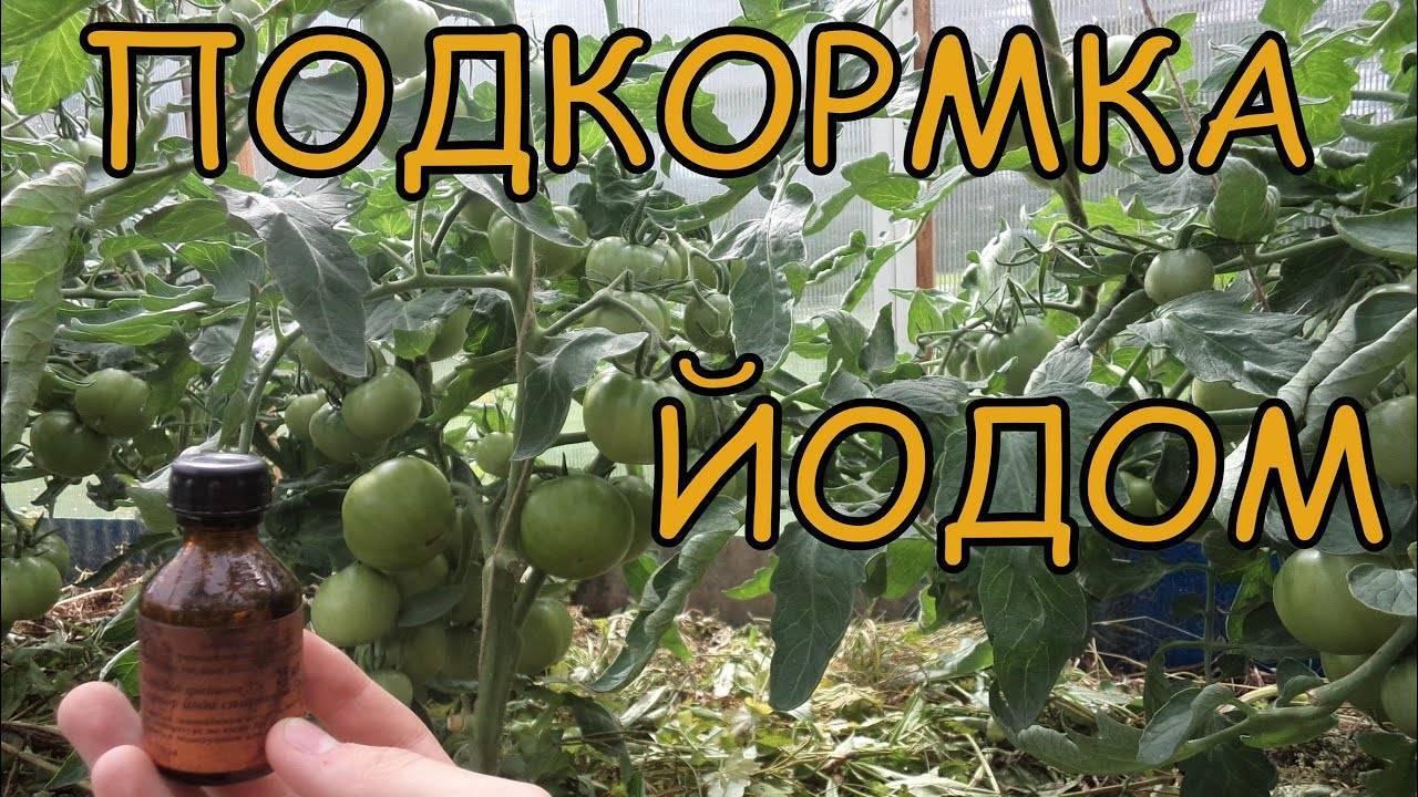 Лучшие удобрения для томатов: какое питание идеально подойдёт для рассады  и тепличных помидоров, а также как получить самый богатый, здоровый и вкусный урожай