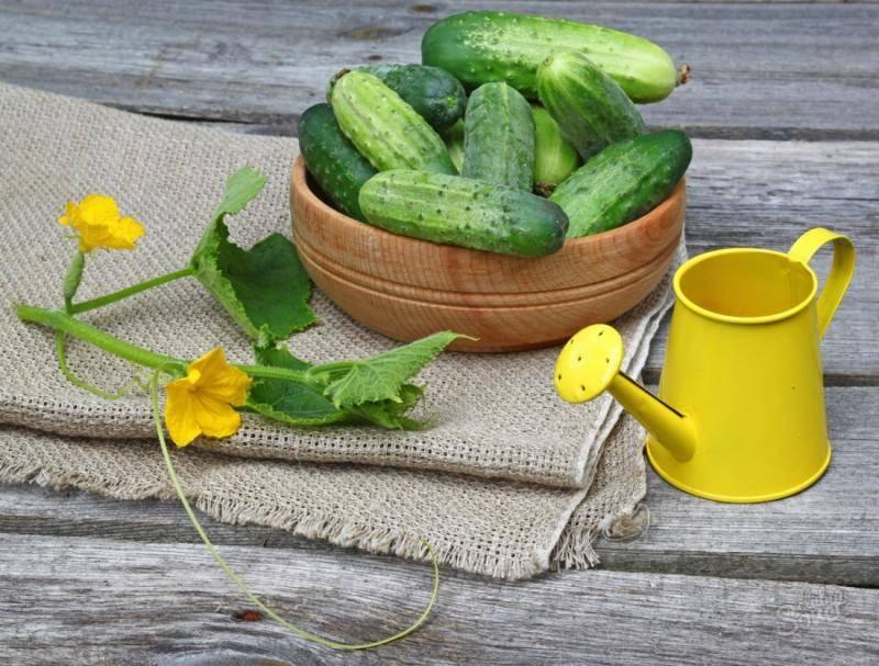 Как часто поливать огурцы в открытом грунте и теплице?