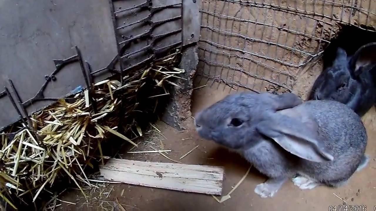 Разведение кроликов в яме: плюсы и минусы, обустройство ямы