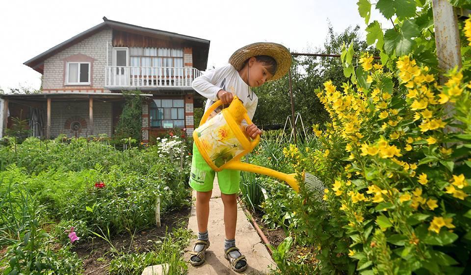 Когда сажать семена, и рассаду цветов в открытый грунт?