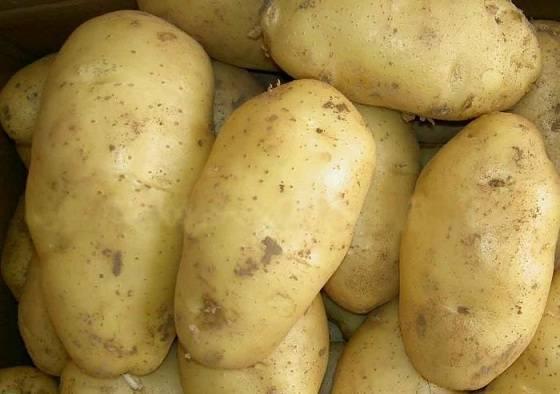 О картофеле взрывной: описание семенного сорта, характеристики, агротехника