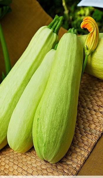 Белоплодные кабачки: популярные сорта и выращивание