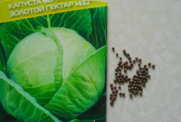 Принципы замачивания семян перед посадкой на рассаду