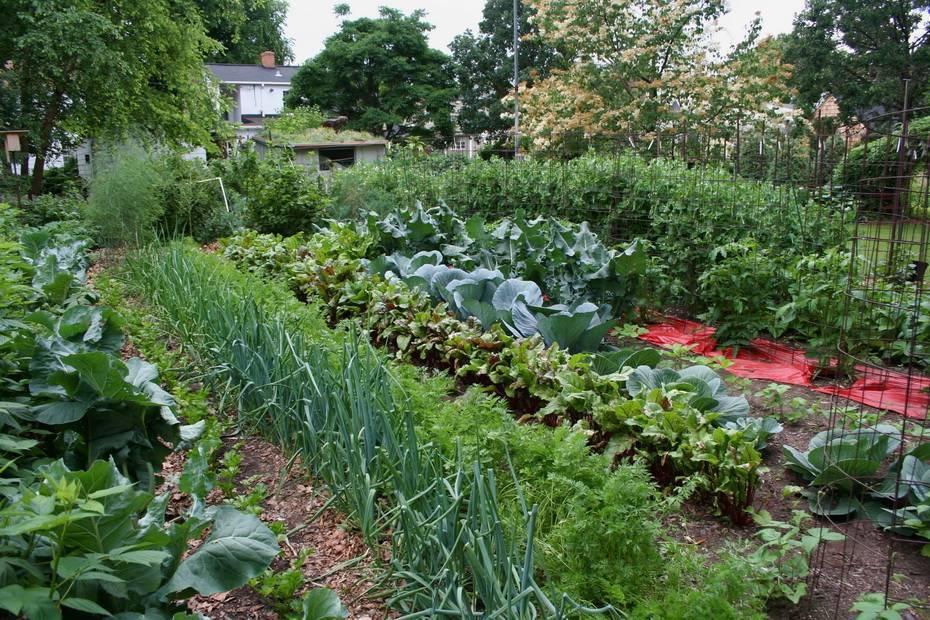 Урожайный огород про морковь после чего сажать. что после чего сажать? грамотное планирование посевов