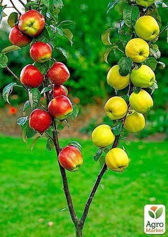 Польза и вред, особенности применения листьев яблони