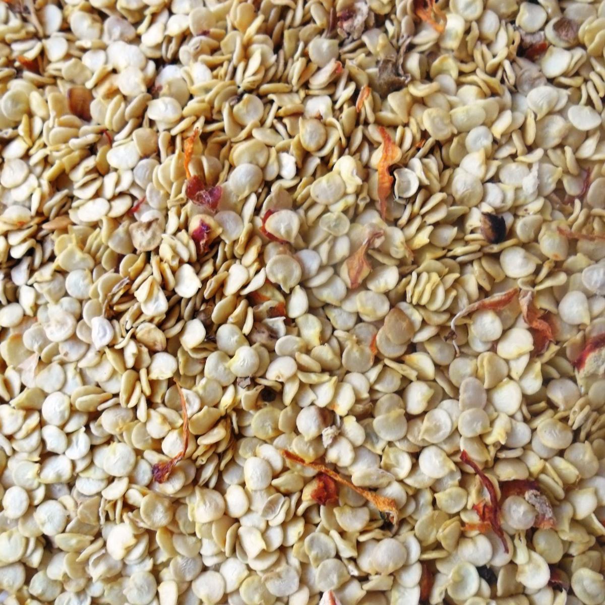 Нужно ли замачивать обработанные семена огурцов и как это делать