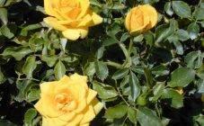 Какие удобрения вносить весной: чем подкормить сад, огород, газон и цветник
