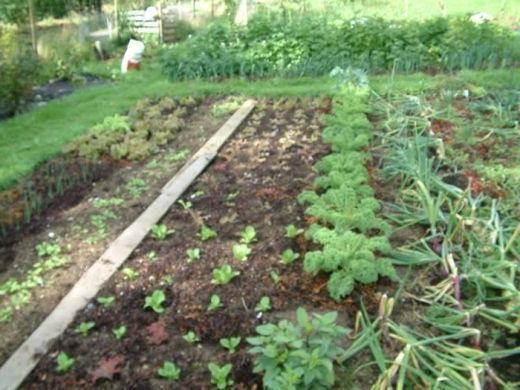 Что посадить после тыквы