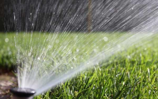 Как поливать плодовые деревья в жару для урожая