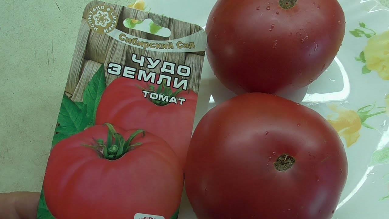 разделе томат чудо земли описание сорта фото отзывы то