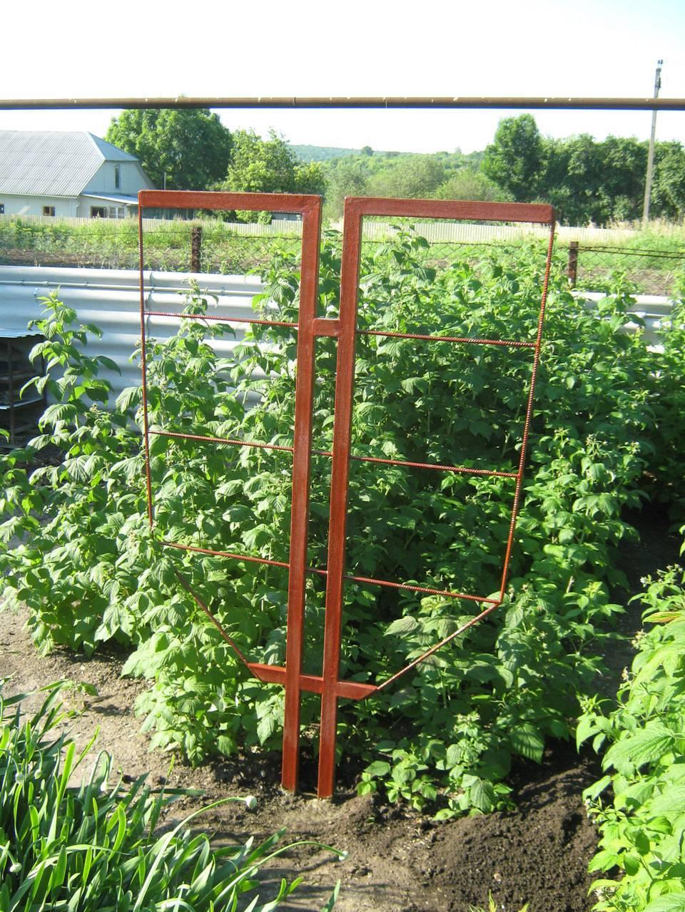Особенности посадки и выращивание малины на шпалерах