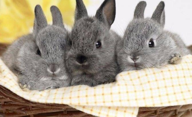Почему у кролика выпадает шерсть?