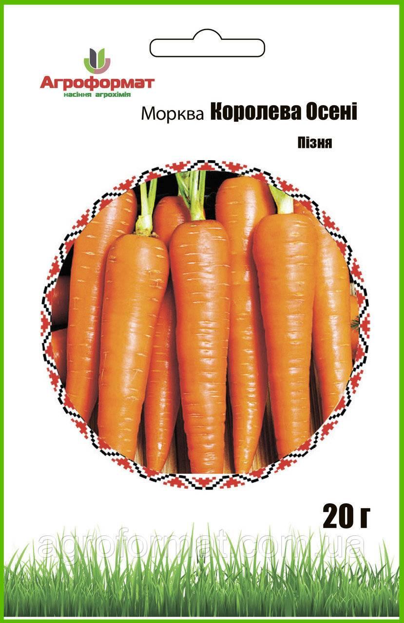 Морковь королева осени — отличный позднеспелый сорт для длительного хранения