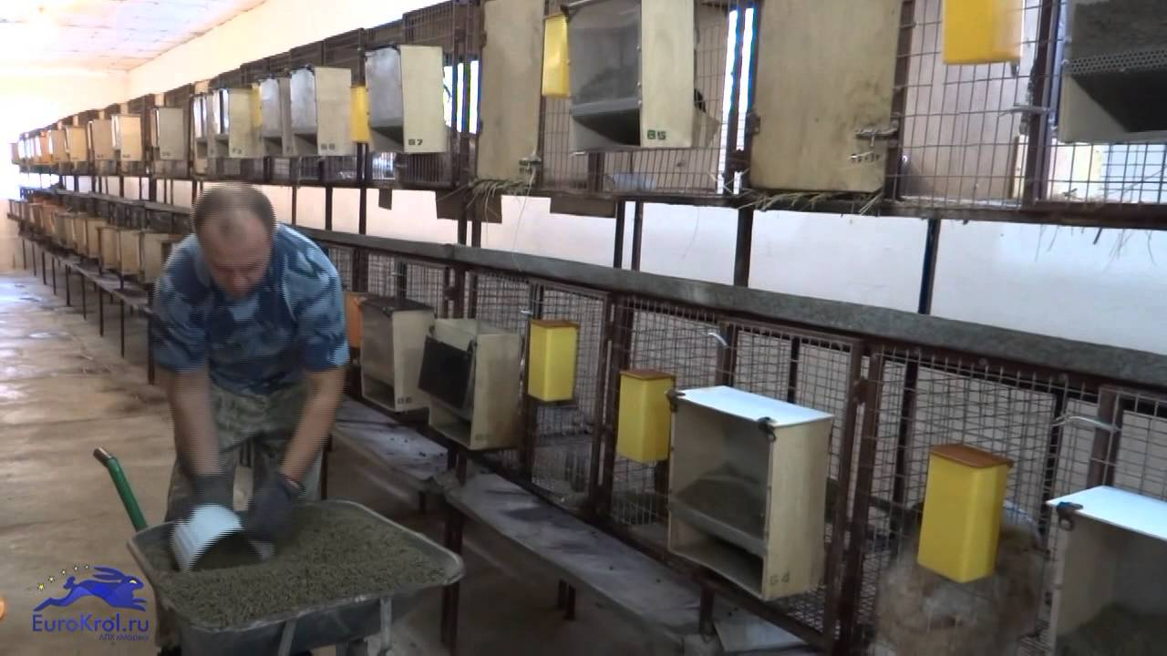 Изготовление кормушки для кроликов своими руками, и какими должны быть самодельные кормушки
