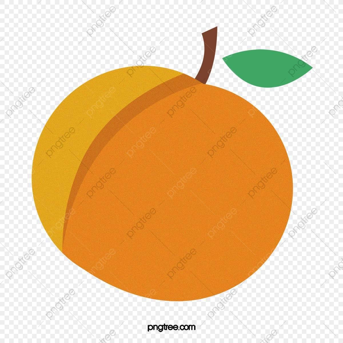 Выращивание абрикоса – правила, тонкости посадки и полезные рекомендации по уходу