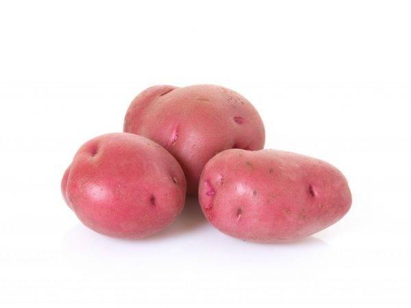 Картофель лаура описание сорта отзывы