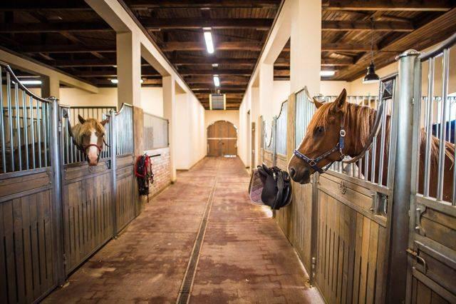 Своя лошадь:где держать и чем кормить
