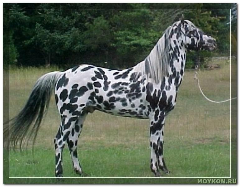 Лошадь вороной масти: описание, фото, уход