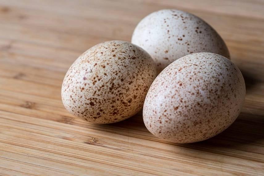 Чем яйца цесарок лучше куриных и в чем их сила