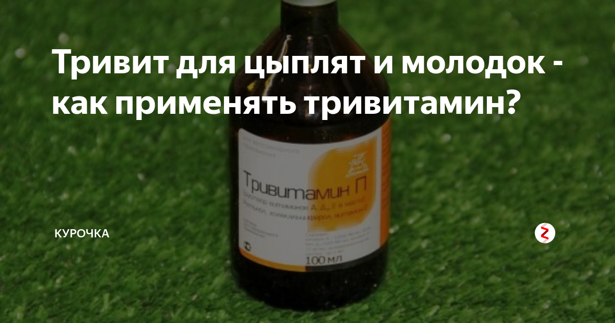 Как давать тривитамин п курам. применение «тривитамина» для птиц: инструкция, дозировка
