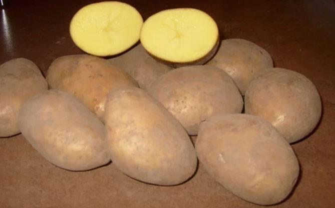 Картофель скарб — сокровище беларуси
