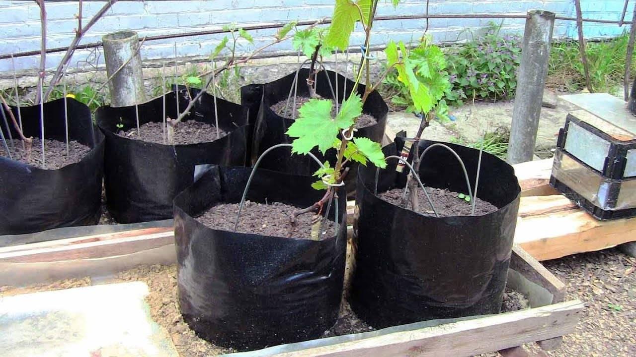 Как ухаживать за саженцами плодовых деревьев: подкормка, правила полива