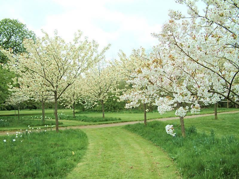 Почему не плодоносит черешня — основные причины и советы что делать если не цветет дерево черешни (80 фото и видео)