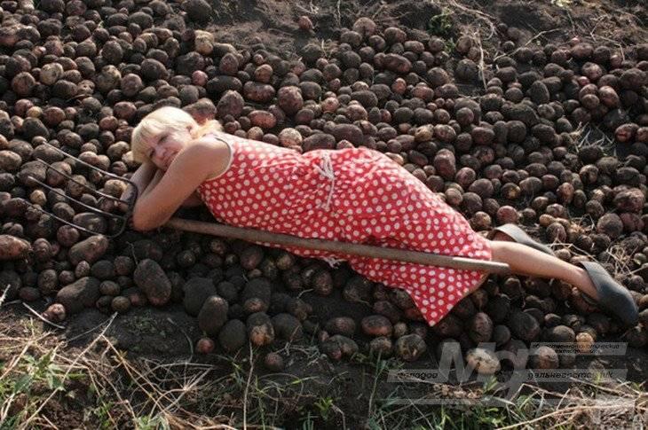 Копаю картошку