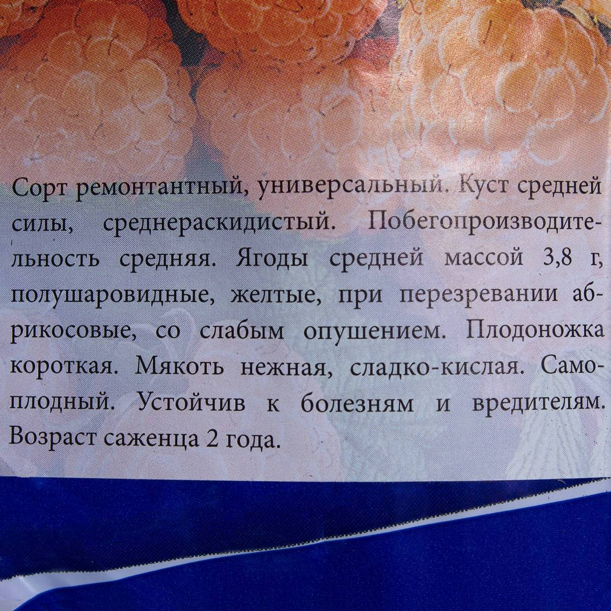 Малина сорт абрикосовая