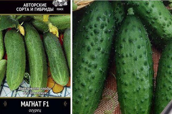 Огурец гуннар f1: описание, достоинства, технология выращивания, уход, семена, отзывы