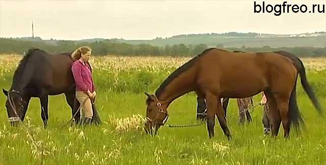 Мясное коневодство как бизнес: рентабельность, отзывы