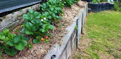 Вертикальные грядки для клубники своими руками при выращивании
