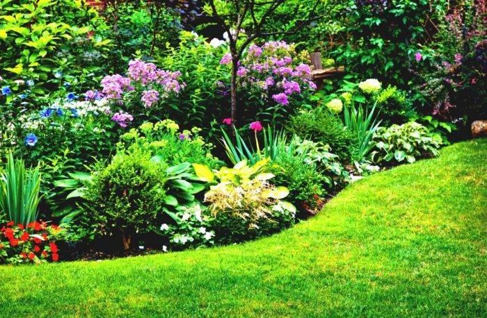 О клумбе из многолетников непрерывного цветения: схема посадки и описание