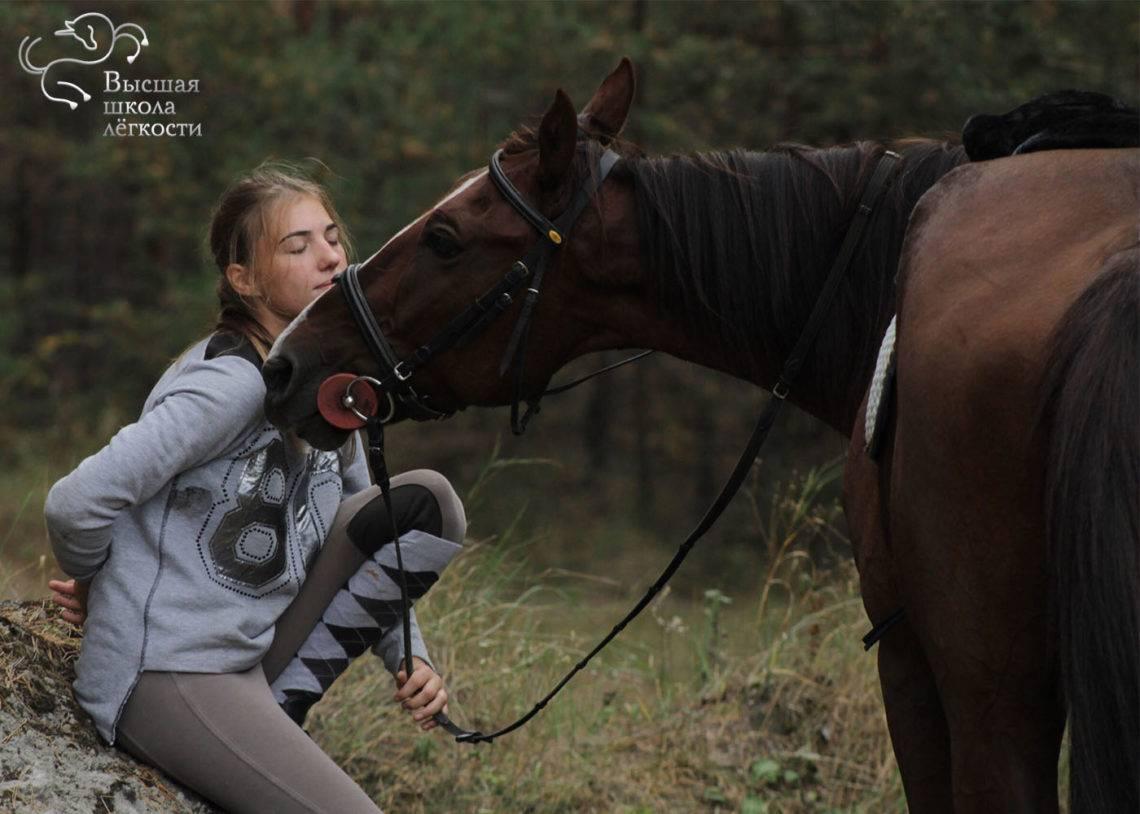 Как в домашних условиях проводить дрессировку лошадей, правила и советы, книги