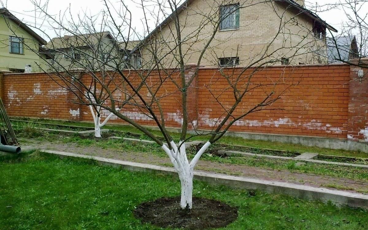 Сад весной: три обязательных весенних обработки против болезней и вредителей