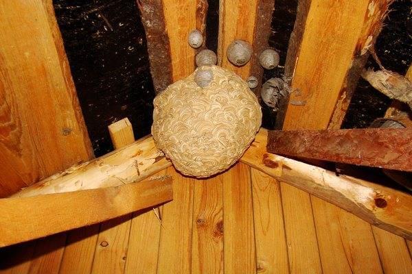 Осы свили гнезда на даче в недоступном месте, что делать