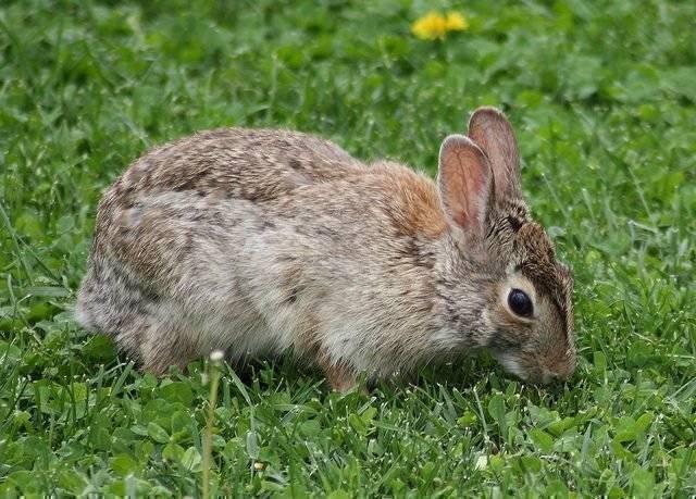 Какую траву можно и нельзя давать кроликам: правила и нормы кормления